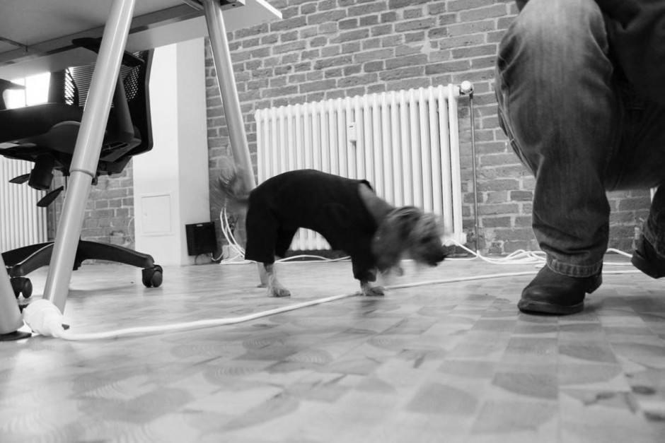 Bürohund Kascha im Anzug