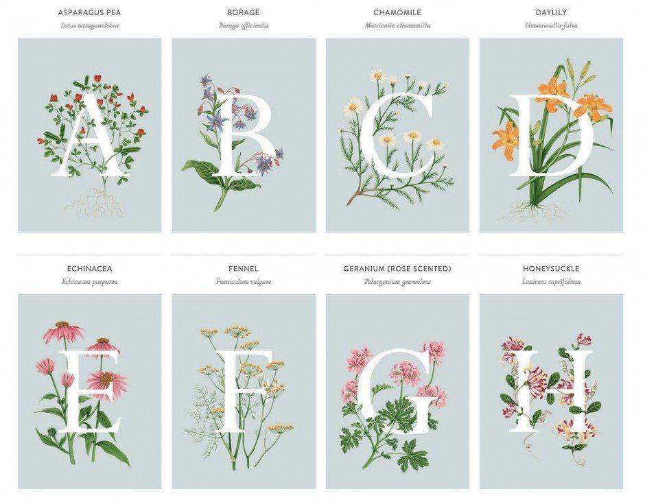 Charlotte Day hat essbare Blumen von A bis Z illustriert. http://charlottedaydesign.com