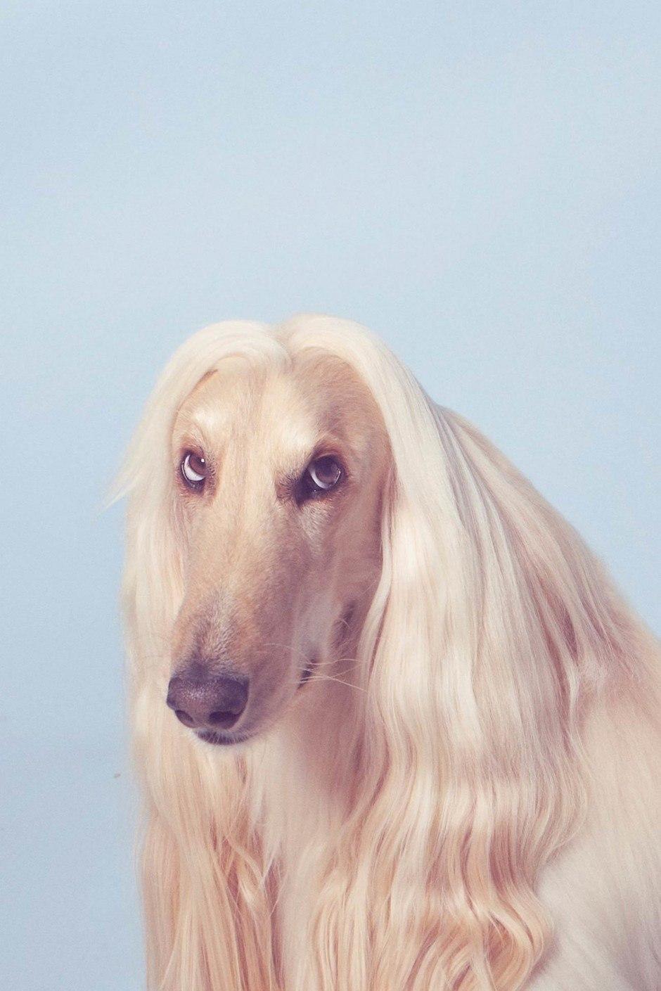 Aus einer Fotoserie über Haustiere