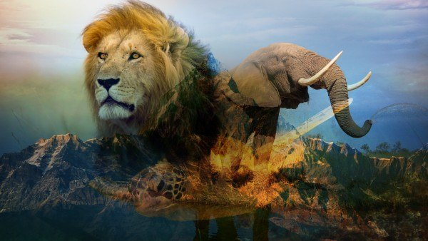Lion_Elephant-without-logo-600x338