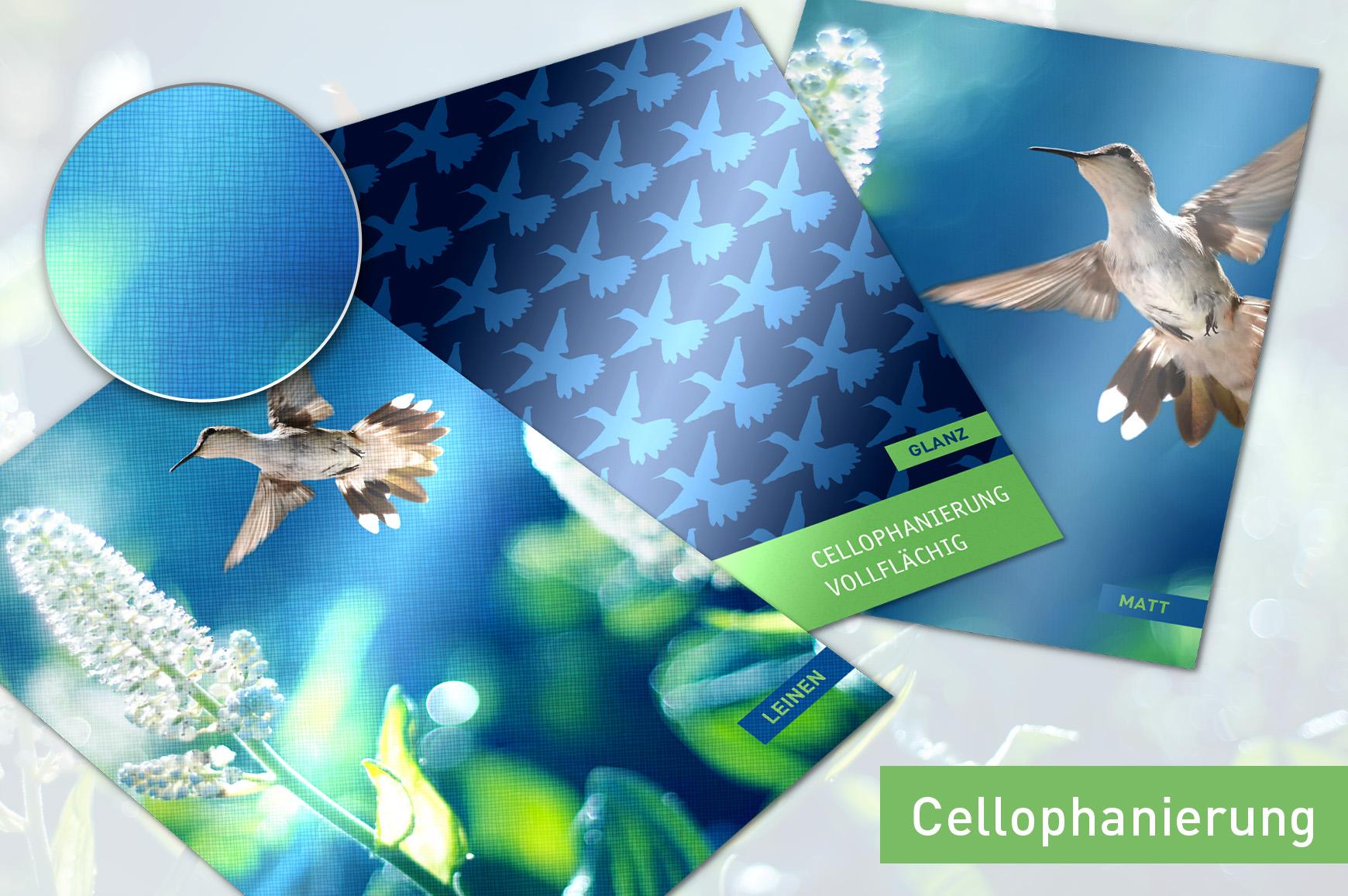TE_160314_unitedprint_neu_Flyer-Cellopanierung-b