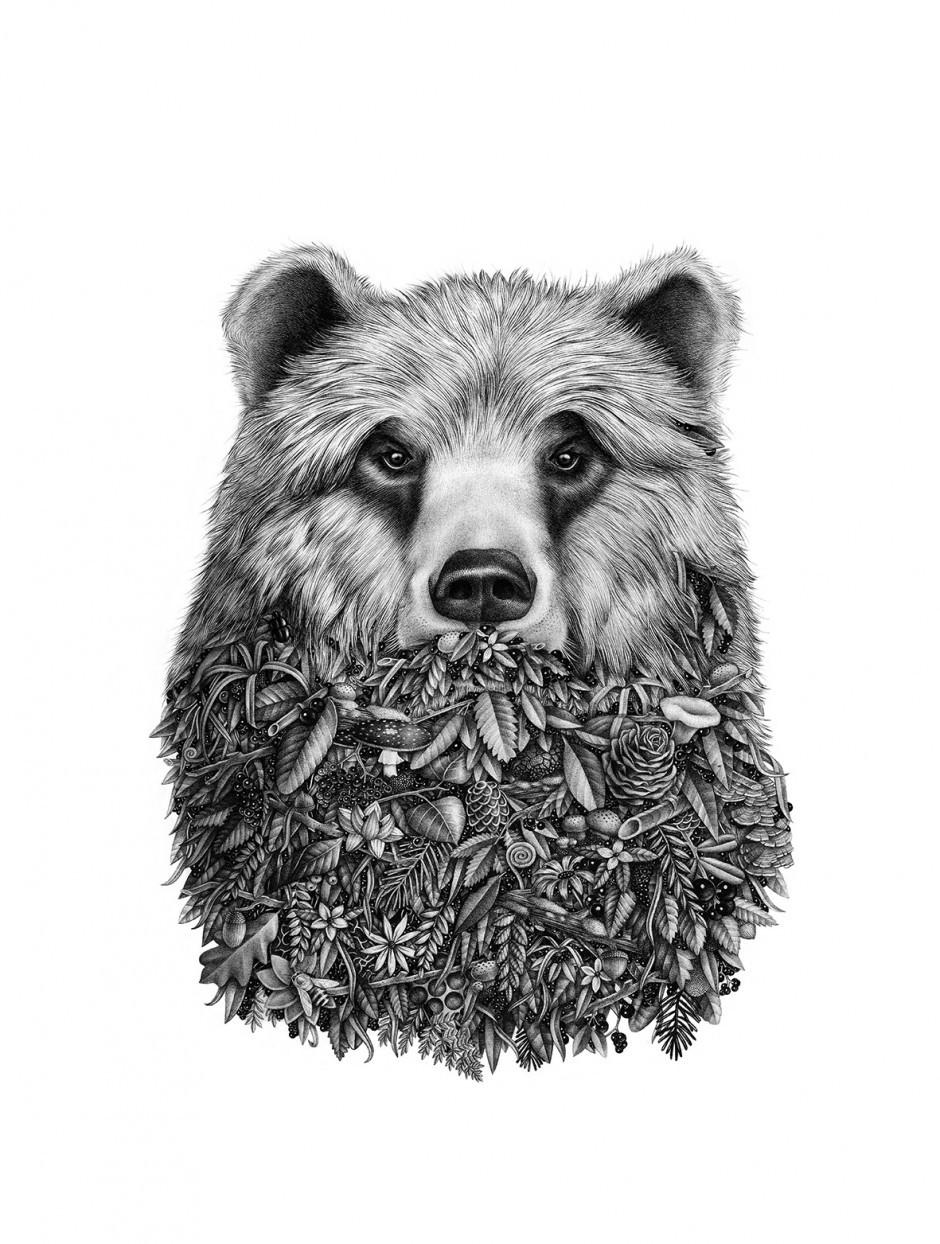 Illustration – Barbu