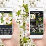 BI_160526_Shutterstock-Mobile-ReverseV2