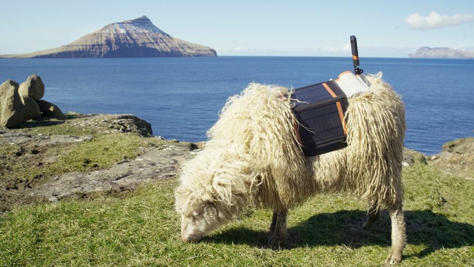 Die Faröer Inseln aus der Sicht der Schafe