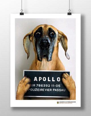 Akademie für Problemhunde
