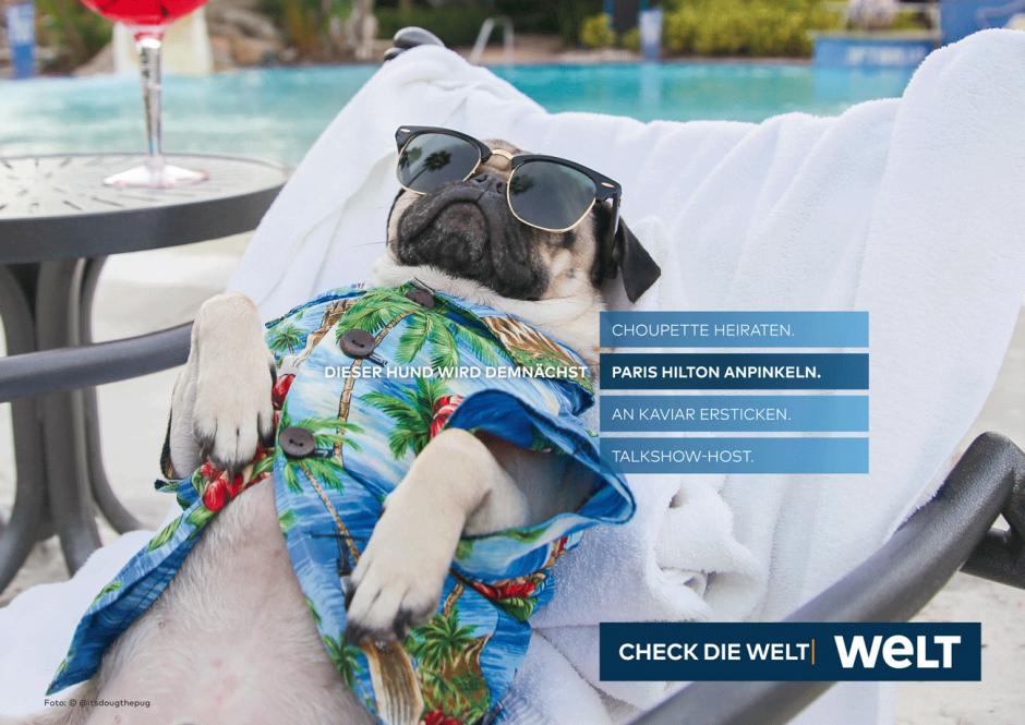 WELT-Kampagne: Motiv Hund