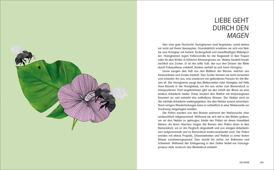 Wunderbares Buch über Bienen – ungewöhnlich illustriert   PAGE online