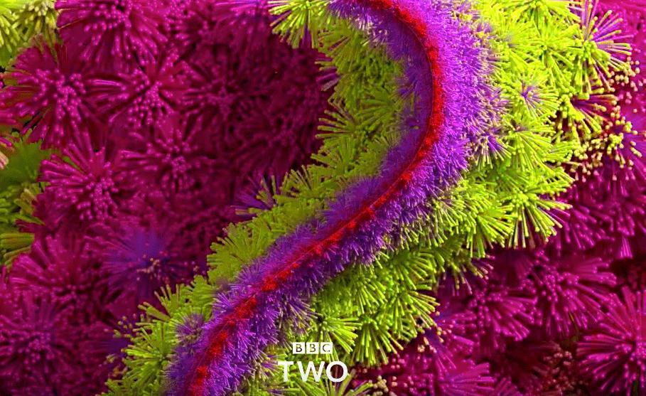 BBC Two, Rebranding