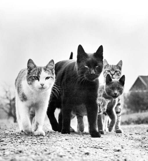 Buchtipp und Fotoband: Walter Chandohas Cats