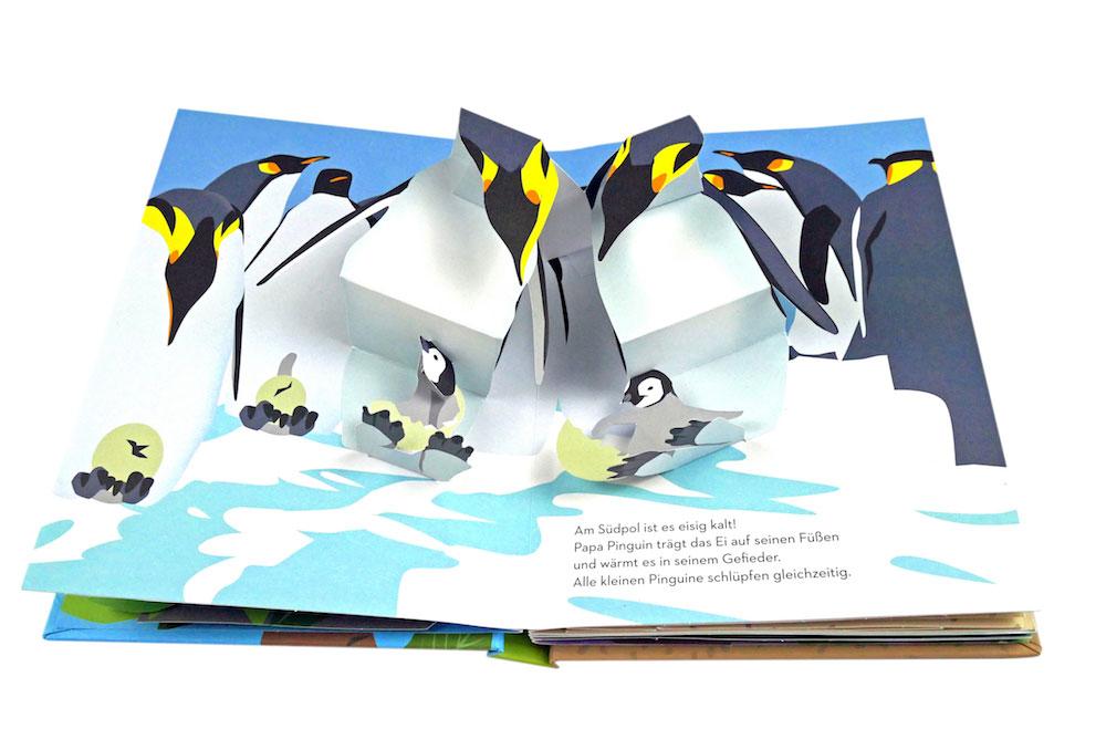 Pop-Up Buch, Maike Biederstädt