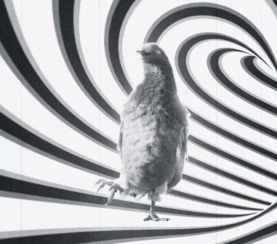 Werbespot Animation Tiere Sehsucht Stromanbieter EnBW