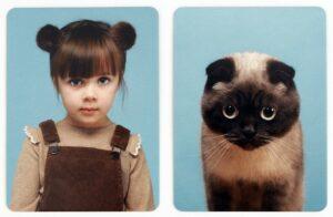 Witziges Memory-Spiel Katzenfotos