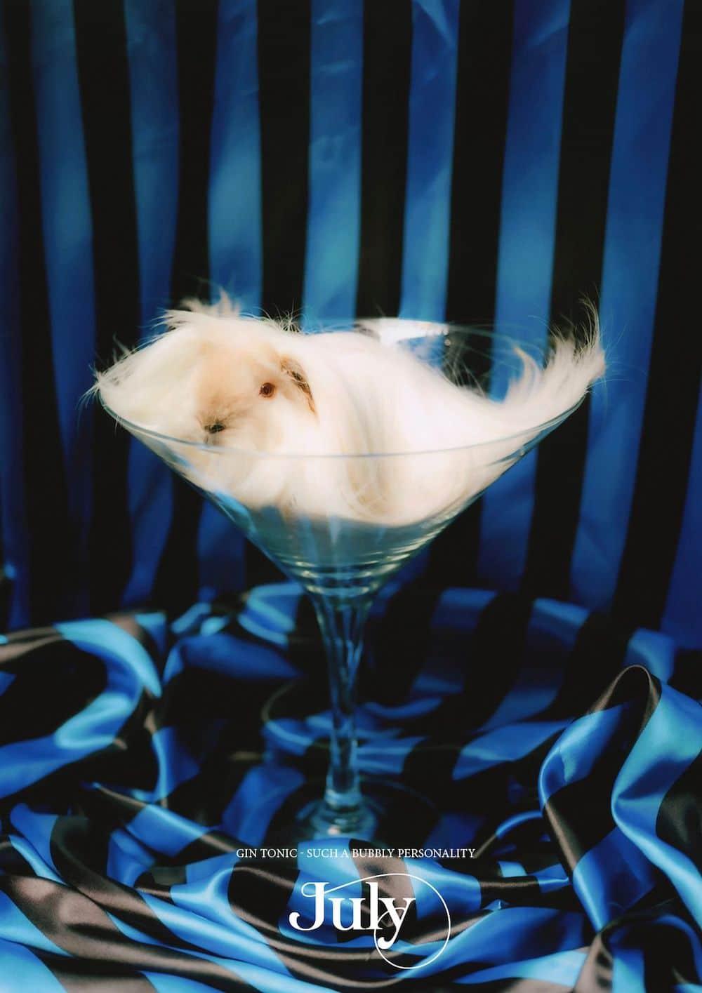 Skurrile Wandkalender 2021 Tierkalender Meerschweinchen Fotograf KOEKKOEK