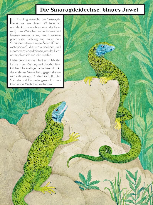 Farbenbuch die Farben der Tiere Kinderbuch-ab 8 Jahren Claire Gastold