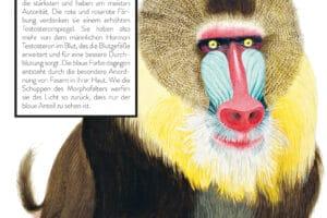 Kinderbuch über die Farben der Tiere