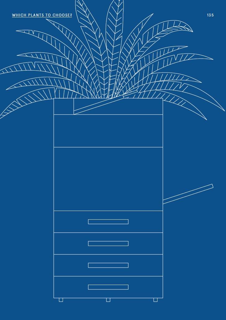 Welche Pflanzen eignen sich fürs Office