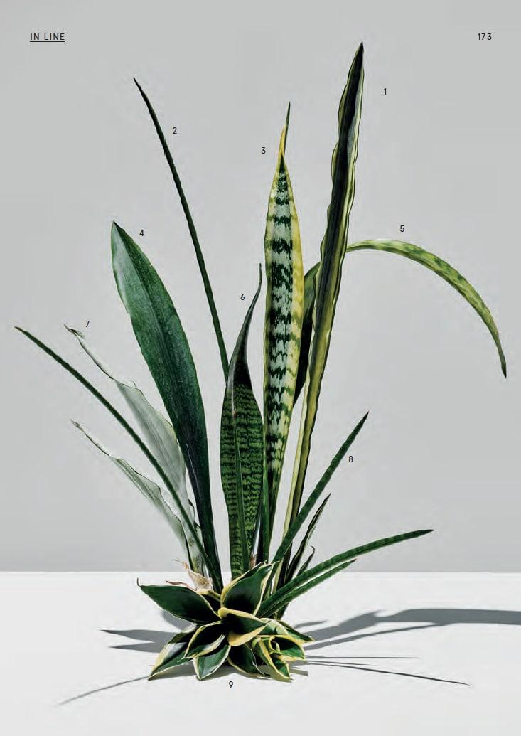 Welche Pflanzen im Büro