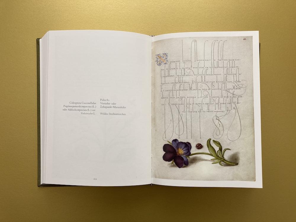 Schriftmusterbuch 16. Jahrhundert
