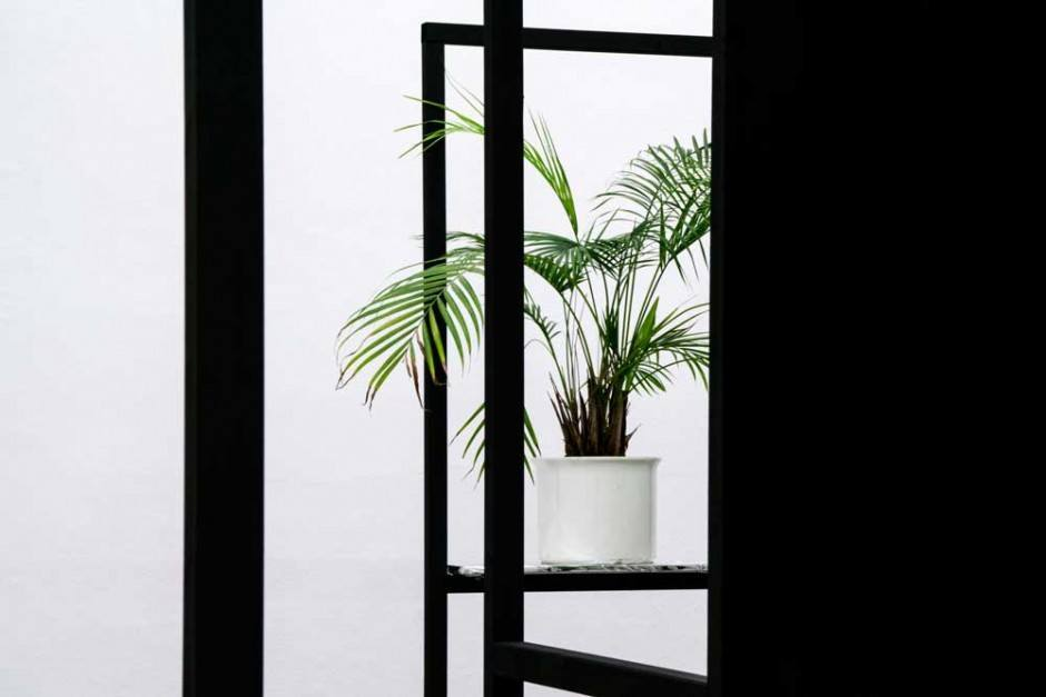 places-of-safety_installation_palme_sandra-weber_web-002